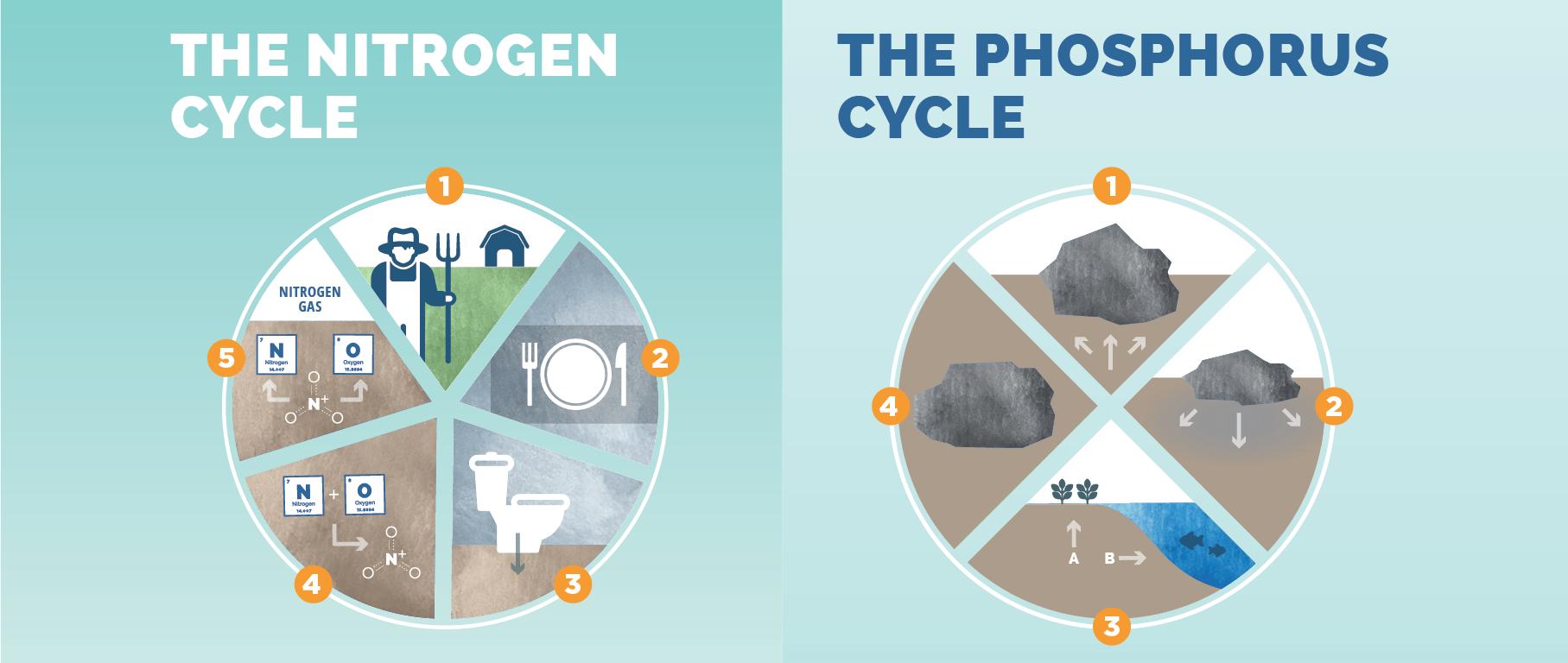 Nitrogen-Phosporus-Details