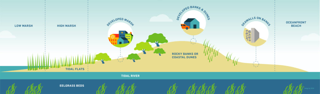 Shorelines infographic
